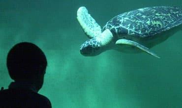 grand-aquarium-st-malo